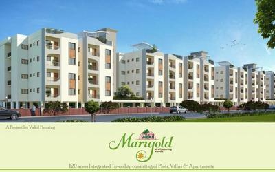 vakil-marigold-in-chandapura-7cb