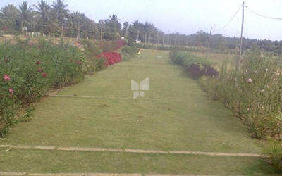 sri-venus-pappampatti-plot-in-kannampalayam-elevation-photo-1vsf
