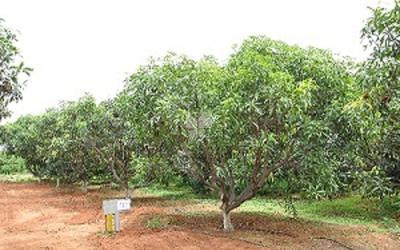 swarna-mango-garden-resort-phase-1-in-shadnagar-elevation-photo-1fax