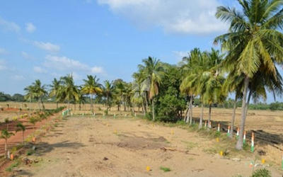 mother-puliamuthur-plot-in-puliakulam-elevation-photo-1vwt