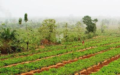 avm-mango-farms-phase-2-in-moinabad-elevation-photo-1uzh